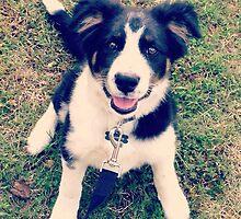 Puppylove  by Mayberrymarsh