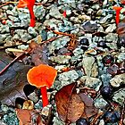 Orange Garden Mushrooms by Lisa Taylor