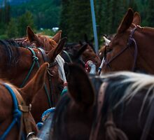 Band of Horses Feeding in Colorado  by Roschetzky