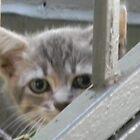 Shy Kitten by Navigator