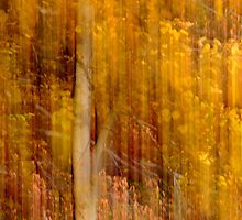Autumn abstract by Laurie Minor
