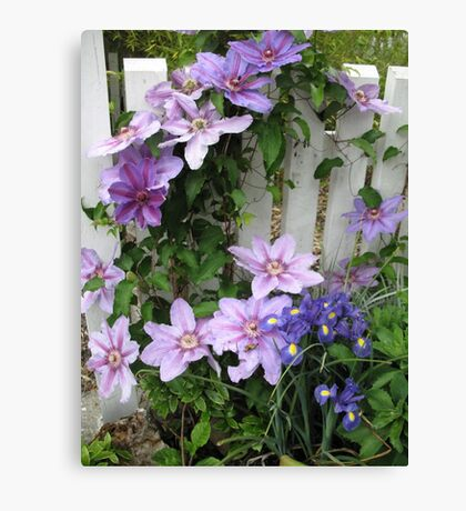 Clematis on white fence Canvas Print