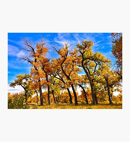 Autumn Dance of the Tall Trees  Photographic Print