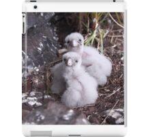 Baby peregrine falcons  iPad Case/Skin