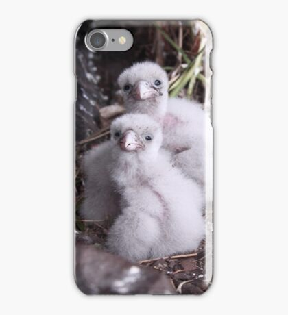 Baby peregrine falcons  iPhone Case/Skin