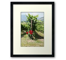 grape and vineyard in spring Framed Print