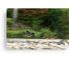 Dynamism of a Cormorant Canvas Print