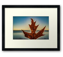 Quercus Rubra - Frozen Northern Red Oak Leaf Bathed In Sunlight | Wantagh, New York Framed Print