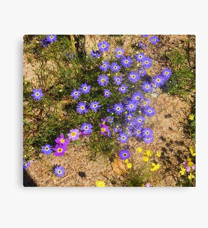 Western Australian Wildflowers, Kings Park, Perth.  Canvas Print