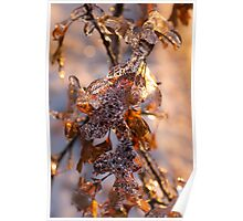 Mother Nature's Christmas Decorations – Golden Oak Leaves Jewels Poster