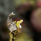 Some Slug by James Deverich