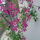 Flowering Tree , Turkey by lynn carter