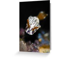 Zephyr Hypselodoris Greeting Card