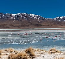 Flamingos on laguna hedionda by travel4pictures