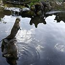 Asian Otters at Escot Park.Devon UK by lynn carter