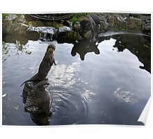 Asian Otters at Escot Park.Devon UK Poster
