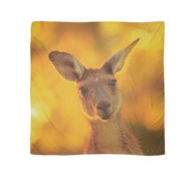 What's Up, Yanchep National Park Scarf