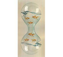 Hour Glass Goldfish Photographic Print