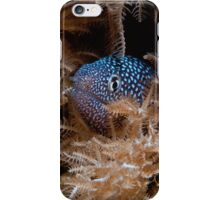 Yellow mouthed moray eel iPhone Case/Skin