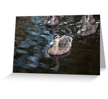 Pacific Black Duck Leading Her Ducklings Greeting Card