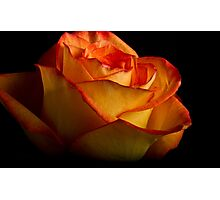 Yellow Orange Rose Photographic Print