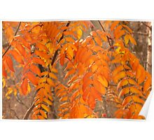 Mountain Ash Leaves in Autumn Poster