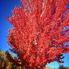 Fall Splendor by Susan Littlefield