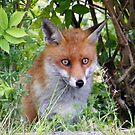 Foxy Fellow by ElsT