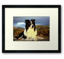 Noble Rob Framed Print