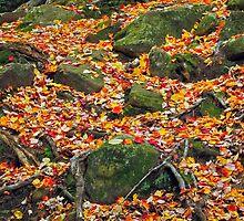 Rocks and Leaves by Kenneth Keifer