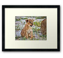 lion cub (Panthera Leo) Framed Print