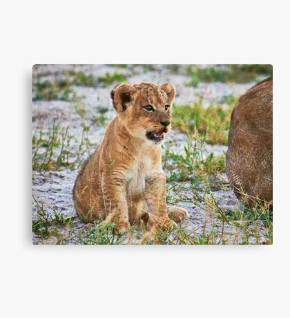 lion cub (Panthera Leo) Canvas Print