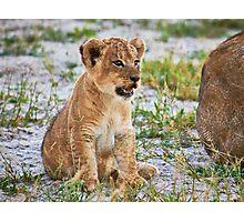 lion cub (Panthera Leo) Photographic Print