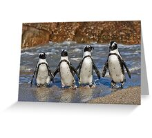 funny image of  four walking African Penguin Greeting Card