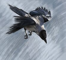 Flying Hooded Crow by Gaia Sorrentino