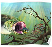 Large Mouth Bass and Clueless Bait Fish Poster