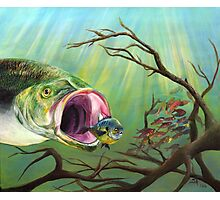 Large Mouth Bass and Clueless Bait Fish Photographic Print