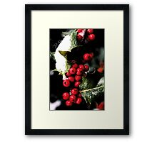 Holiday Holly Framed Print