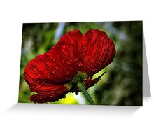 Refreshed Poppy  Greeting Card