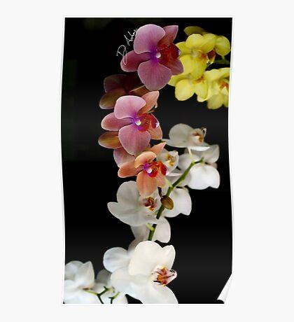 Rare Bloom Poster