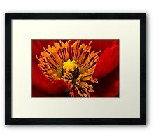 Red Flame Framed Print