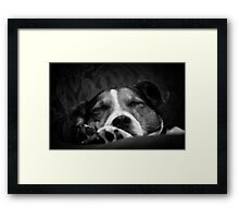 It's a dog's life Framed Print