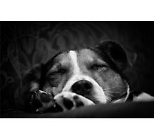 It's a dog's life Photographic Print