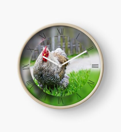 Cochin chicken on green grass looking at camera Clock