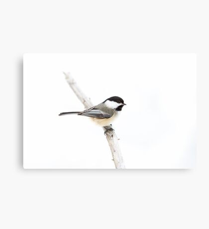 Black-capped Chickadee in winter Canvas Print