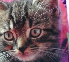 Kitty Daydream Sticker