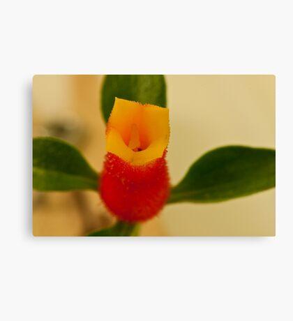 Candy Corn Flower Macro Canvas Print