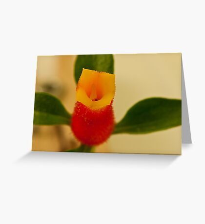 Candy Corn Flower Macro Greeting Card