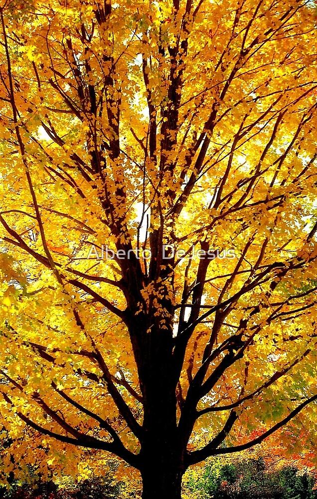 Golden Autumn  by Alberto  DeJesus