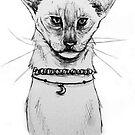Siamese Choker Cat by Jeanette  Treacy
